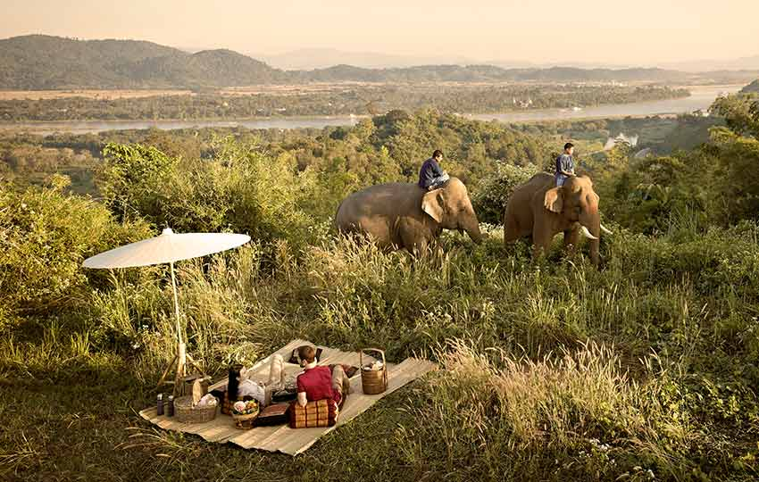 Truly Experience picnic with elephants in the countryside