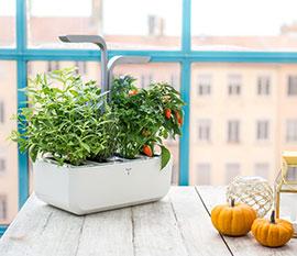 Pots & Planting