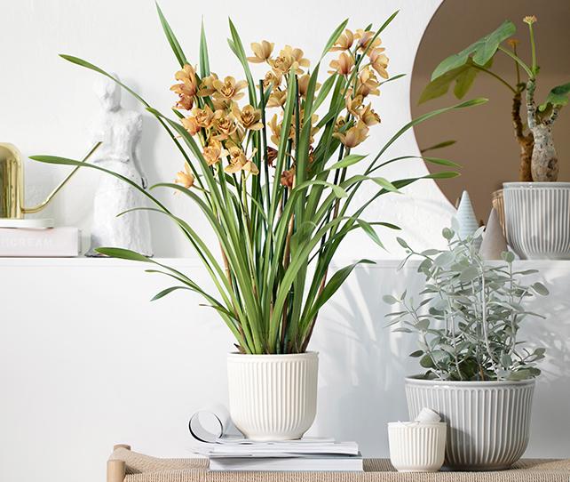 Kahler planters