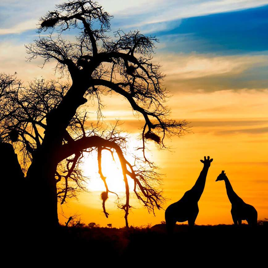 South Africa and Mozambique, 14 days from  £8,721